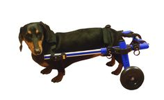 Dog Wheelchair - Blue - For Small Dogs 11-25 lbs - By Walkin' Wheels