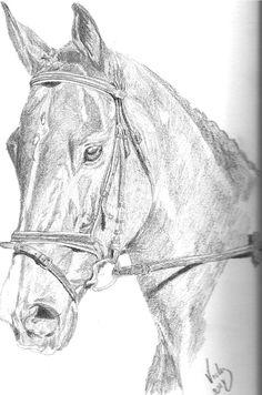 Cabeza de caballo. Grafito