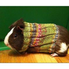 Keeping it warm! my Piggie needs a sweater