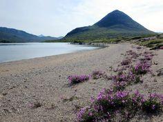 Fireweed grows along the shores of this lake off Tasermiut Fjord near Tasiusaq, Greenland.