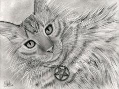 """Purrfect page of Pentacles"" 6""x8"" Pencil Drawing on Bristol Paper, 2016. My own kitty Sweet Mika Bunny as the ""Purrfect Page of Pentacles"". Prints & Gift Items featuring this artwork are available on my website. © Carrie Hawks, Tigerpixie Art Studio, Fantasy Cat Art Tigerpixie.com"