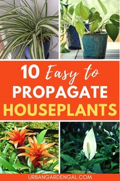 Propagating indoor plants is easy to do and in this article I've listed 10 houseplants that you can easily propagate at home, even if you're a beginner gardener. You don't need any special gardening skills! Gardening For Beginners, Gardening Tips, Urban Gardening, Propagate Aloe Vera, Pothos Plant, Plant Propagation, Cuttings, Baby Succulents, Jade Plants