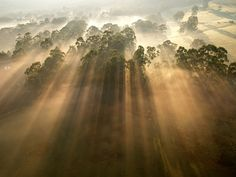 Sunbeams on trees