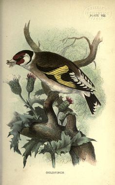 Hand-book to the birds of Great Britain