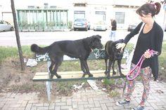 06/11/2014 - Torino con Ollie