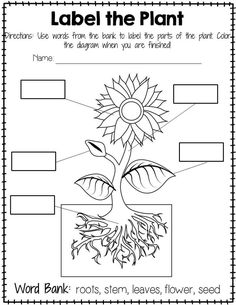 Plant Labeling Worksheet - Freebie Teach your students about the different parts of a plant with this simple yet educational worksheet! Blank boxes on the worksheet correspond with the parts on a diagram. Word bank is included on the worksheet!
