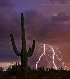 Desert Storm - Tucson, Arizona