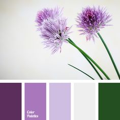 Wonderful expressive palette. The noble and spectacular. Shades of purple, violet, green - a combination founded by nature. Imagination draws endless laven.