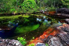 Cano Cristales Fluss, Kolumbien