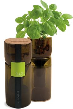 SUMMER * ENTERTAINING | Hostess Gifts ~  Wine bottle basil garden -repurpose an old wine bottle into a countertop basil garden