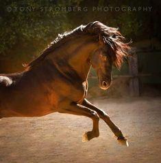 Horse Water, Horses, Animals, Life, Animales, Animaux, Animal, Animais, Horse