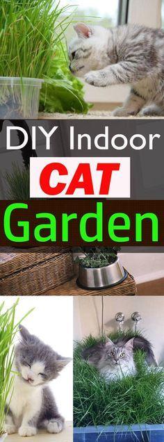 Cats Toys Ideas - Best of Home and Garden: DIY Indoor Cat Garden For Cat Lovers - Ideal toys for small cats Cat Grass, Cat Hacks, Cat Garden, Terrace Garden, Garden Web, Indoor Garden, Gatos Cats, Cat Room, Small Cat