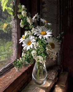 Almost a painting, daisies by the gentle window - Blumen Sunflowers And Daisies, Wild Flowers, Fresh Flowers, Beautiful Flower Arrangements, Floral Arrangements, Amazing Flowers, Beautiful Flowers, Flower Vases, Flower Art