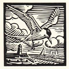 Richard Allen: Common tern