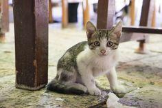 Kitten in Skopje's old town.
