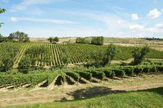 Terre di Varano  vineyards (Montepulciano, Chardonnay, Pecorino and Trebbiano)