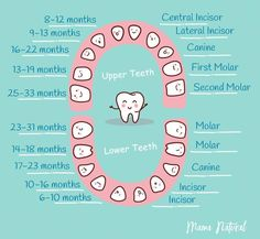 How many teeth do kids have? How many baby teeth? When does baby get each tooth? Which tooth comes first? Find out in our baby teething chart! Baby Teething Chart, Baby Teething Remedies, Teething Symptoms, Teething Babies, Premiere Dent, Baby Chart, Tooth Chart, First Tooth, Baby Supplies