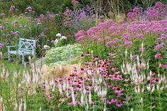 Tall verbena (behind bench) summer to frost. Partial shade to full sun. coneflower, stone crop in border. Culver's root
