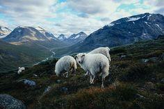 Destination Galdhøpiggen, Norway.Shot with Fujifilm X00s and... http://www.monclerenfr.com/