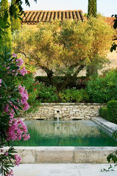 From the 'Mediterranean Gardening: A model of Good Living' by Dr Louisa Jones.  The formal pool overhung by an olive tree, pink & red oleanders and other Mediterranean plants is to be found in the Pierre Berge garden in Provence. Features in the Aug/Sep 13 issue of Greenworld Magazine. www.greenworldmag.com.au