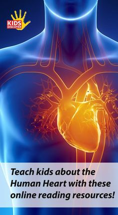 Introduce students to the human heart using these online reading resources! Each topic comes in three reading levels, perfect for grades 3-8.