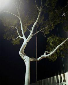 Night Landscapes, photos by Amanda Friedman.