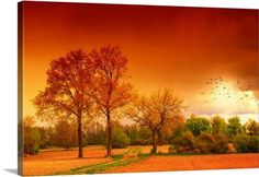 """Orange World"" by Philippe Sainte-Laudy via @greatbigcanvas available at GreatBIGCanvas.com."