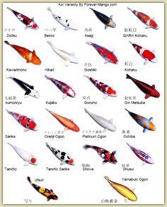 Koi fish names!