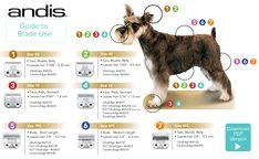 Andis Dog Clippers Pet Grooming Lambert Vet Supply