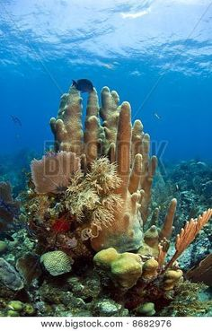 Underwater Coral Reef Poster Under The Water, Under The Ocean, Sea And Ocean, Underwater Sea, Underwater Photos, Underwater Photography, Film Photography, Street Photography, Landscape Photography