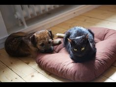 These Cats Are The Boss And They Know It…And These Poor Dogs Don't Have A Chance | Slightly Viral
