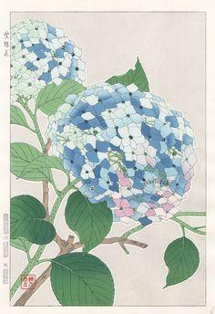 Hydrangea from Shodo Kawarazaki Spring Flower Japanese Woodblock Prints