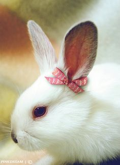 who can resist a rabbit with a bow ?