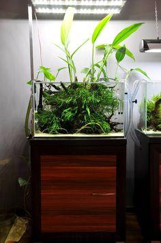 Diy Aquarium Stand, Nano Aquarium, Home Aquarium, Aquarium Design, Aquarium Fish Tank, Aquarium Ideas, Aquarium Aquascape, Small Fish Tanks, Cool Fish Tanks