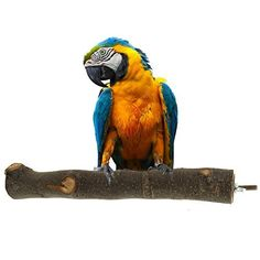 Natural Wood Branches Large Bird Perches for Parrot Macaw African Greys Budgies Parakeet Conure Bird Cage Accessories Stands Exercise Toys - https://www.balanced4u.net/crittercare/natural-wood-branches-large-bird-perches-for-parrot-macaw-african-greys-budgies-parakeet-conure-bird-cage-accessories-stands-exercise-toys/