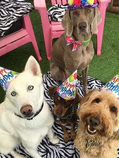National Dog Party Day: Tips To Make Your Dog Party A Barking Blast - Dogtime Dog First Birthday, Puppy Birthday, Dog Christmas Presents, Dog Accesories, Dog Cafe, Puppy Party, Dog Signs, Animal Party, Happy Dogs