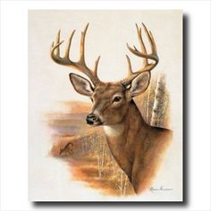 Whitetail Buck Deer Antler Rack And Doe Animal Wildlife Wall Picture Art Print Art Prints Inc http://www.amazon.com/dp/B0029TSY5I/ref=cm_sw_r_pi_dp_FdSNvb1XQCYRB