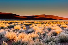 Dune 45 at sunrise in Namibia - BelAfrique - your personal travel planner - www.BelAfrique.com
