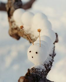 snow caterpillar
