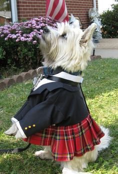 Tartan kilts - for dog clothes fans who crave the girlie options but have male dogs ~mgh Scottish Man, Scottish Kilts, Yorkshire, Highlands Terrier, West Highland Terrier, Yorkies, Westies, Westie Puppies, Bichons