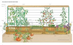 Grasping at Straw: A Foolproof Vegetable Plot - NYTimes.com  #Amazmerizing