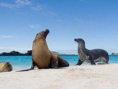 ECUADOR  Las Islas Galápagos - Vea las tortugas gigantes y leones marinos.