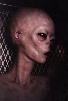 THere are a lot of alien photos around these days. All of them have been dubbed fakes by the general public. Are there any photos of real aliens? Are there real aliens? If aliens are real, what are they? Ancient Aliens, Aliens And Ufos, Alien Gris, Grey Alien, Alien Pictures, Alien Photos, Vampires, Art Zombie, Alien Encounters