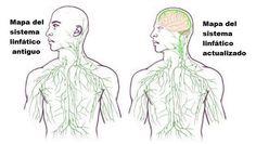 Este descubrimiento trae implicaciones profundas para las enfermedades del cerebros desde el autismo a el Alzheimer y la esclerosis múltiple.