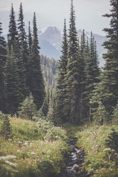 New Photography Nature Forest Wilderness Ideas Landscape Photos, Landscape Photography, Nature Photography, Camping Photography, Photography Aesthetic, Photography Flowers, Photography Ideas, Nature Sauvage, Shooting Photo