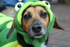 Pin for Later: Your Comprehensive Guide to Dog and Cat Halloween Costumes Frog