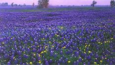 #bluebonnets #hillcountry #texas #home