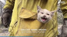 Firefighters save lives, it's what they do — but this time that life belonged to a tiny, frightened orange kitten who was running from the Bear Fire currently raging in Northern California. Daniel Trevizo, a fire captain with the Los Angeles County Fire Department, took video with his phone when he saw the little guy […] The post Firefighter Rescues Tiny Kitten from Northern California Fires [VIDEO] appeared first on The Catington Post. Tiny Kitten, Little Kittens, Orange Kittens, Living With Cats, Take Video, Los Angeles County, Animal Control, Save Life, Fire Department