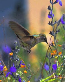 kolibri.
