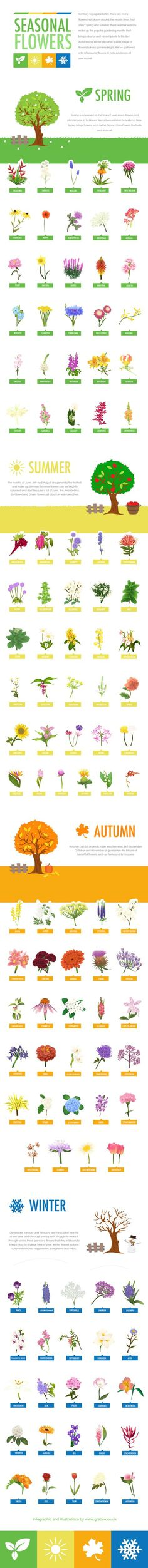 Contrary to popular belief, there are many flowers that bloom around the year in times that aren't Spring and Summer. Summer and Spring are popular gardening seasons and bring colourful and vibrant plants to life, but Autumn and Winter also offer a wide range of flowers to keep gardens bright. We've gathered a list of seasonal flowers to help gardeners all year round and created the infographic below!